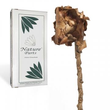 Coco Rose mit Stiel in Natur (100 Stück)