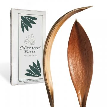 Cocosschale Kokosblatt in Natur ( ca. 30cm lang - 25 Stück )