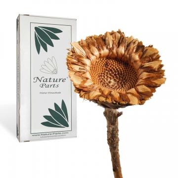 Coronata Rosette in Natur ( 50 Stück )