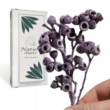 Eukalyptus Zweig mit Stiel in Frosted Blackberry ( 50 Stück )