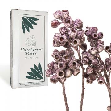 Eukalyptus Zweig mit Stiel in Frosted Pink Erika ( 50 Stück )