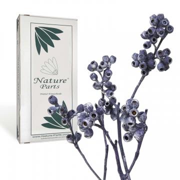 Eukalyptus Zweig mit Stiel in Frosted Purple ( 50 Stück )