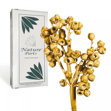 Eukalyptus Zweig mit Stiel gewachst in Caramel ( 50 Stück )