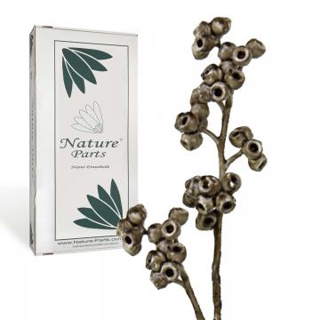Eukalyptus Zweig mit Stiel gewachst in Mocca Grey ( 50 Stück )