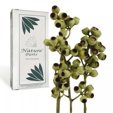 Eukalyptus Zweig mit Stiel Natur 1+ ( 50 Stück )