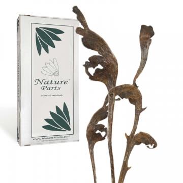 Natraj Zweig Natur lackiert ( 30 Stück )