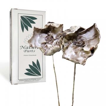 Palm Cup am Stiel gewachst Mocca Grey (40 Stück)