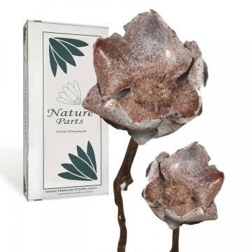 Indian Rose gewachst am Stiel in Kupfer Glitter ( 20 Stück )