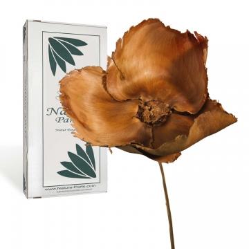 Palm Cup am Stiel in Natur ( 40 Stück )
