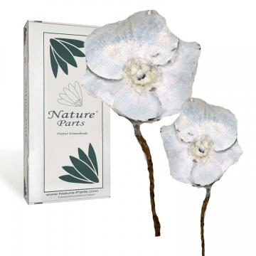 Indian Rose gewachst am Stiel in Weiß Glitter ( 20 Stück )