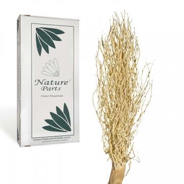 Palm Jhar gebleicht ( 50 Stück )