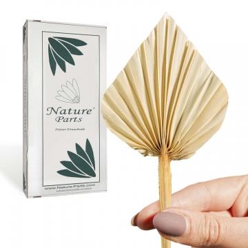 Palm Spear Mini in Gebleicht ( 100 Stück )