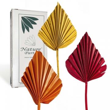 Palm Spear im 3fach Farbmix ( 50 Stück )