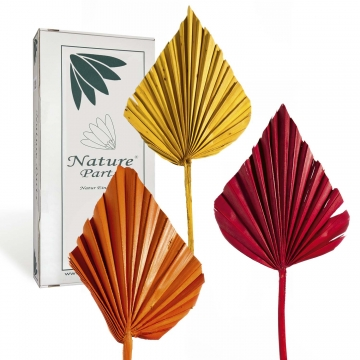 Sortiment Palm Spear im 3fach Farbmix ( 50 Stück )