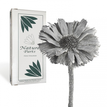 Protea geschnitten Medium in Frosted Blackwashed ( 40 Stück )