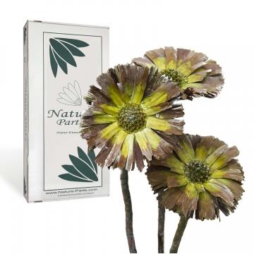 Protea geschnitten Medium in Frosted Grün ( 40 Stück )