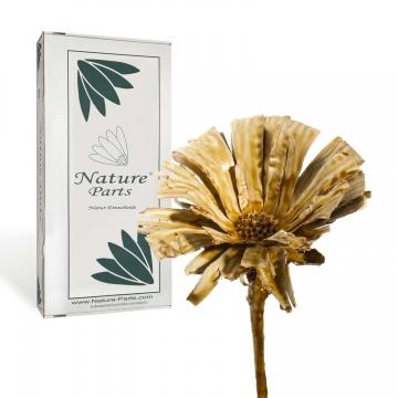Protea geschnitten gewachst in Caramel ( 40 Stück )