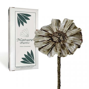 Protea geschnitten gewachst in Mocca Grey ( 40 Stück )