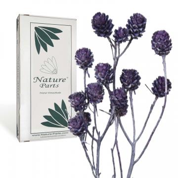 Salignum Zweig Extra in Frosted Purple ( 30 Stück )
