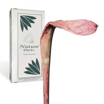 Shoehorn Large in Flamingospring ( 25 Stück )
