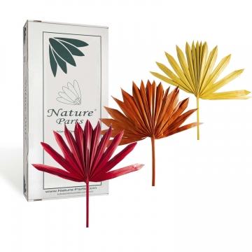 Sortiment Sun Palm Cut mit Stiel im 3fach Farbmix ( 30 Stück )