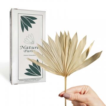 Sun Palm Cut mit Stiel in Gebleicht ( 30 Stück )