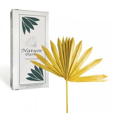 Sun Palm Cut mit Stiel in Gelb ( 30 Stück )