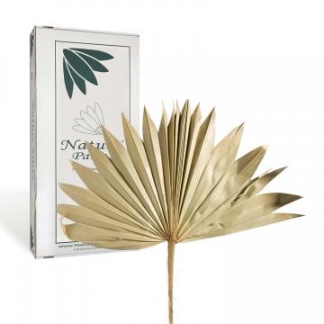 Sun Palm Cut mit  Stiel in Natur ( 30 Stück )