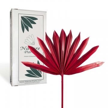 Sun Palm Cut mit  Stiel in Rot ( 30 Stück )