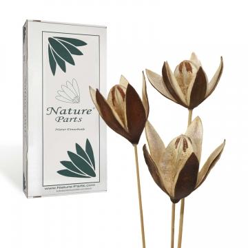 Wildlilie am Stiel in Natur ( 50 Stück )