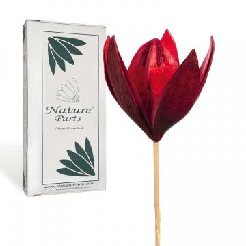 Wildlilie am Stiel in Rot ( 50 Stück )