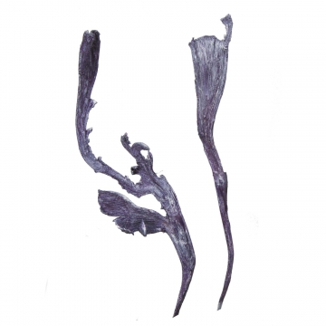 Natraj Zweig Groß in Frosted Purple      (500 Stück)