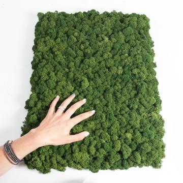 Moos•Moos Islandmoos Organic Moosbild ´Nicolai´ (40x60cm) in Moosgrün – Moosplatte – einzigartiges Gefühl trifft auf besonderes haptisches Gefühl