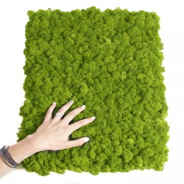 Moos•Moos Islandmoos Organic Moosbild ´Nicolai´ in Apfelgrün – Moosplatte ( 40x60cm ) – einzigartiges Gefühl trifft auf besonderes haptisches Gefühl -