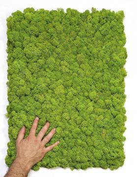 Moos•Moos Islandmoos Organic Moosbild ´Nicolai´ (40x60cm) in Apfelgrün – Moosplatte – einzigartiges Gefühl trifft auf besonderes haptisches Gefühl -