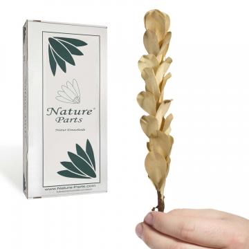 Palm Pine 8er Gebleicht ( 50 Stück )