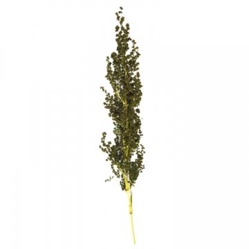 Palmiet Vlei Zweig gefärbt in Grün (30 Stück)