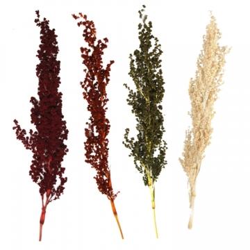 Sortiment Palmiet Vlei Zweig im 4fach Farbmix ( 40 tlg. )