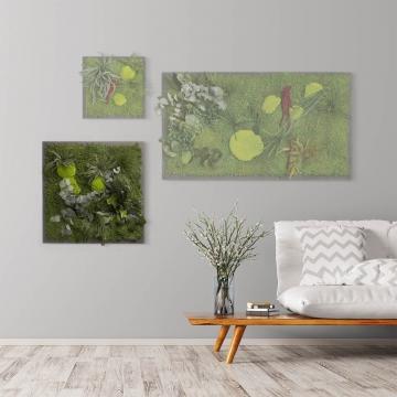 Moosbild ´Pflanze´ 55 x 55 cm auf Holzfaserplatte anthrazit