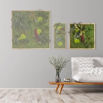 Moosbild ´Pflanze´ 55 x 55 cm mit Rahmen aus geölter Eiche