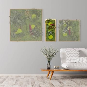 Moosbild ´Pflanze´ 57 x 27 cm mit Rahmen aus geölter Eiche