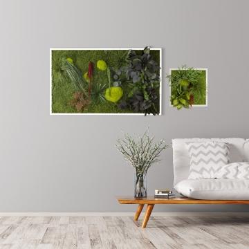 Moosbild ´Pflanze´ 100 x 60 cm mit weißem Tischlerrahmen