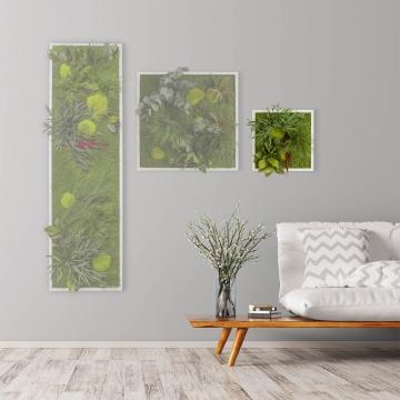 Moosbild ´Pflanze´ 35 x 35 cm mit weißem Tischlerrahmen