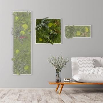 Moosbild ´Pflanze´ 55 x 55 cm mit weißem Tischlerrahmen