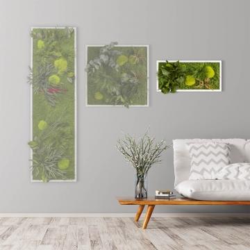 Moosbild ´Pflanze´ 57 x 27 cm mit weißem Tischlerrahmen
