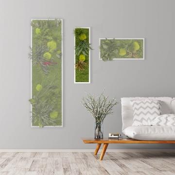 Moosbild ´Pflanze´ 70 x 20 cm mit weißem Tischlerrahmen