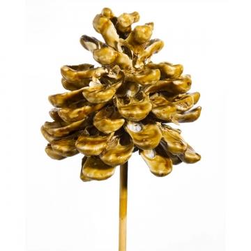 Pinea Zapfen am Stab gewachst in Caramel (75 Stück)
