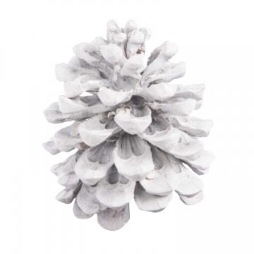 Pinea Zapfen Mittel Stonewashed (75 Stück)