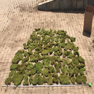 Plattenmoos / Waldmoos getrocknet und unbehandelt( ca. 5m² ) (5 Kg)