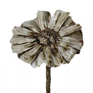 Protea geschnitten gewachst in Mocca Grey      (350 Stück)